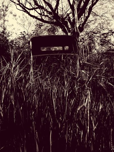 abandonned car in nature Car Oldcar Nature Grass Herbs Outdoor Nopeople Apo Postapo Apocalyptic Blackandwhite Monochrome Monochrome Photography Monochrome _ Collection Monochrome_life MonochromePhotography Black & White Blackandwhite Photography Black&white Blackandwithe