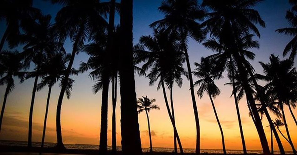 🌅Sunset among Palms🌴 Palms Sun Beachlife Water Salt Sunset Blue Sky Cuzn Orange Kerala Happy Feelloved Love Beach Tree Coconut Ride Alone Beautiful Evening Nikon Instagram Pxlrexpress Click colored life everyday post EyeEmNewHere