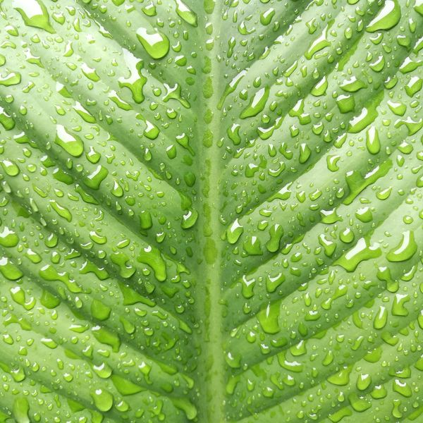 Green Color Leaf Close-up Nature Beauty In Nature Textured  Outdoors Freshness