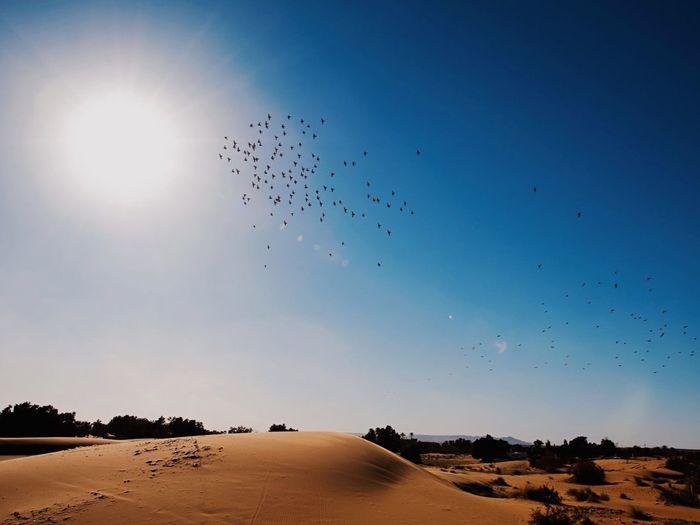 Birds flying over sand dunes
