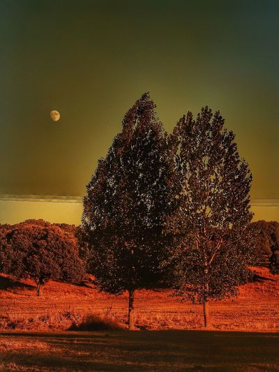 Scenics Tree Beauty In Nature Nature Tranquility Tranquil Scene Landscape Moon Sunset Populus Nigra Populus Biodiversity Rural Scene Countryside Landscape_Collection Nature_collection Rural Moon Dehesa Tranquility Moonlight Beauty In Nature Romantic Inlove Love