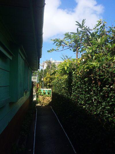 Papaya alleyway パパイヤの路地 Okinawa Shuri Naha Streetphotography