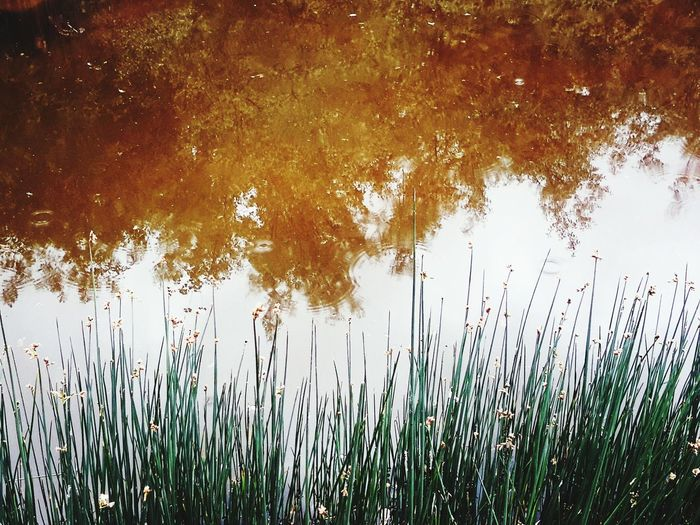 Water Reflections Iranian Garden Bestoftheday EyeEm Best Shots