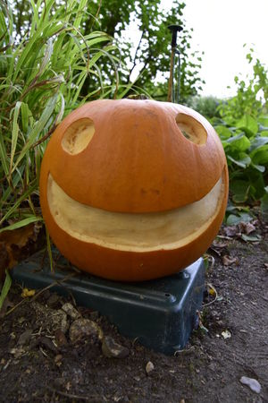 Anthropomorphic Face Beth Chato Gardens Close-up Day Elmstead Market Essex Friendly Growth Halloween Jackolantern Nature No People Outdoors Pumpkin Vertical