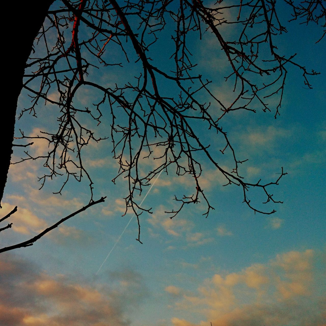 sky, nature, low angle view, no people, beauty in nature, outdoors, day, branch, bare tree, tree, close-up