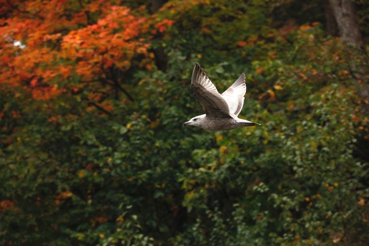 Bird flying by trees over forest