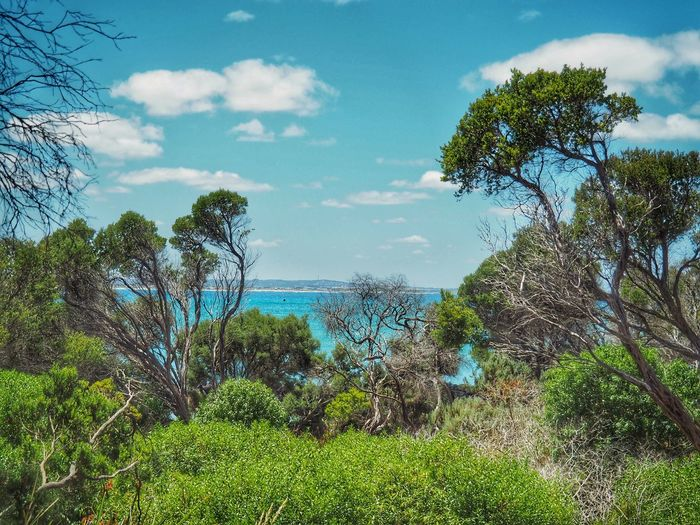 Australian beach and bush scene Australian Coastline Australian Beaches Australian Bush Port Fairy Tree Sky Nature Scenics Tranquil Scene Growth Beauty In Nature Tranquility Green Color Cloud - Sky Sea Plant No People Day Non-urban Scene Outdoors Blue Landscape Water