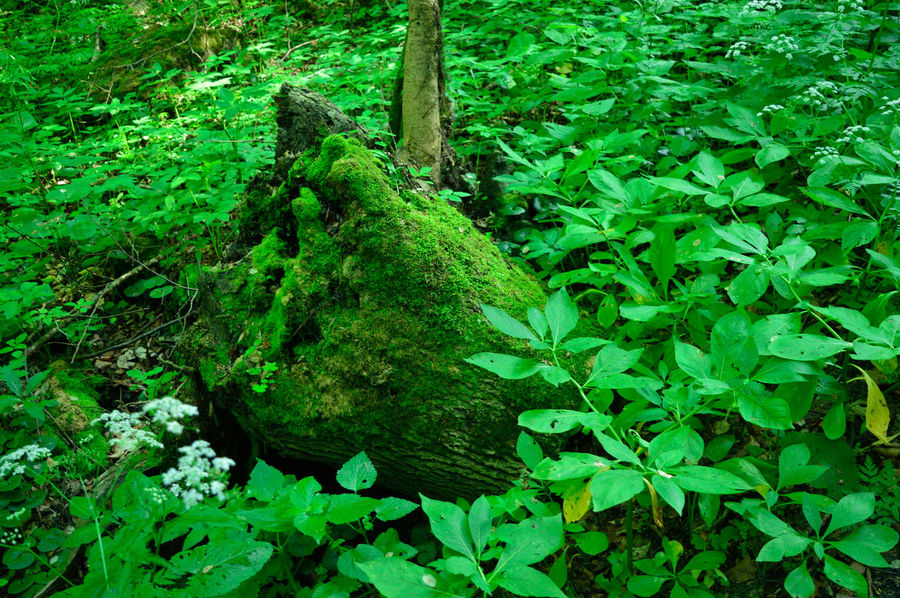 Leafs and a trunk Bükk National Park Chill Mode Forest Forest Photography Green Color Growth Leaf Nature No People Plant Tunk