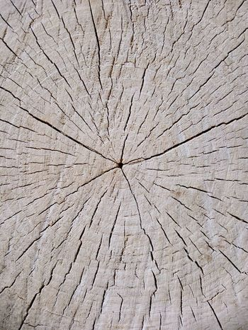 Tree Ring Backgrounds Full Frame Textured  Concentric Destruction Cracked Pattern Abstract Close-up