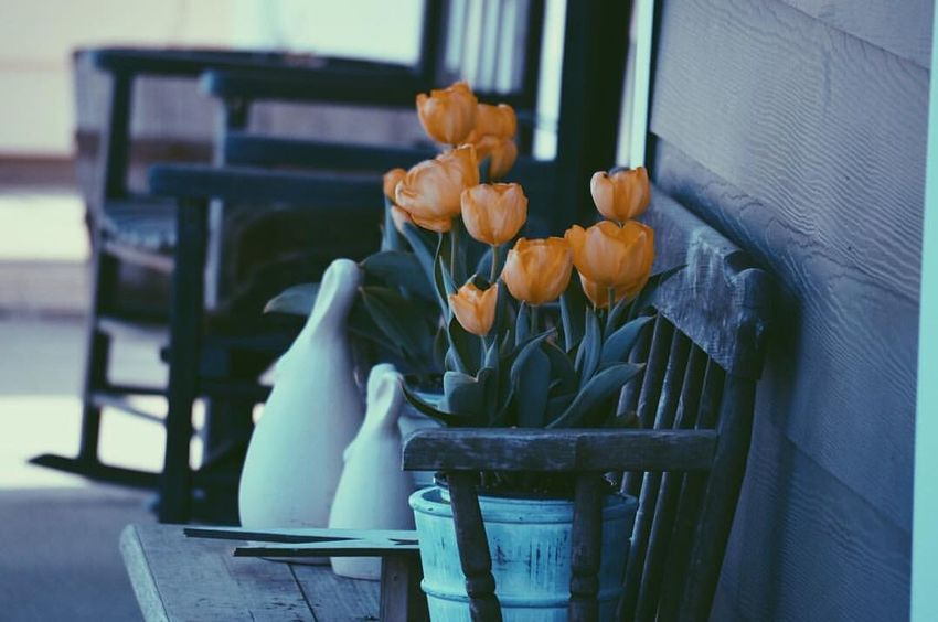 Chair Bench Table Indoors  Orange Color Large Group Of Objects Freshness Bunch Of Flowers Group Of Objects Day