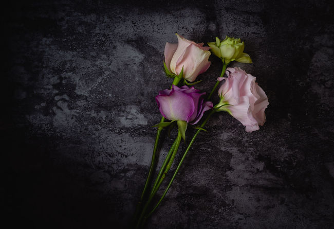Dark Darkness Light Shadow And Light Shadows & Lights Dark Photography darkness and light Flat Lay Flatlay Flatlayphotography Flower Flowers Light And Shadow Light And Shadows Moody Moody Photography Roses Roses🌹 Rose🌹 Shadow
