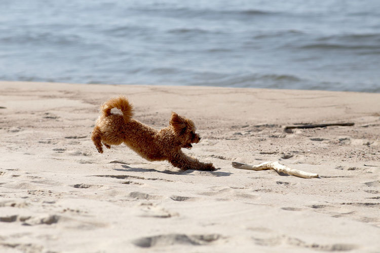 Lizard on the beach