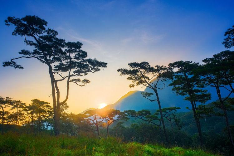 Trees on landscape against sky during sunset