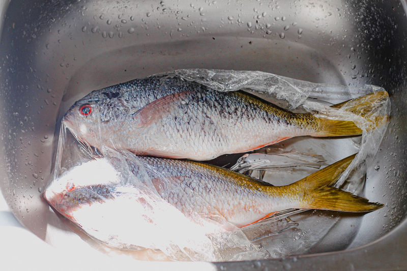 Close-up of fish in container