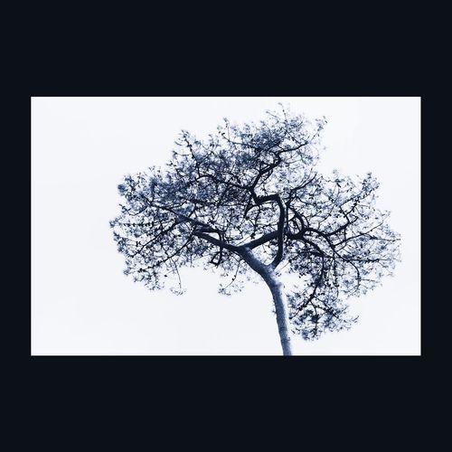 ... La seule feuille que j'aie cueillie s'est changée en plusieurs mirages ... Guillaume Apollinaire Arbre Tree Tree_collection  For The Love Of Trees ~ EyeEm Nature Lover Monochrome EyeEm Best Edits EyeEm Best Shots - Trees Silhouette Tree Silhouette