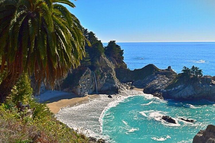Big Sur, California. Julia Pfeiffer Burns State Park McWay Falls Freehand Different Angle Cool Captures Different View Beauty In Nature Beautiful Palm Tree Ocean Ocean View Waterfall Nature Taking Photos Love It So Lucky ❤ I can walk there from our house! Nature On Your Doorstep Naturelover