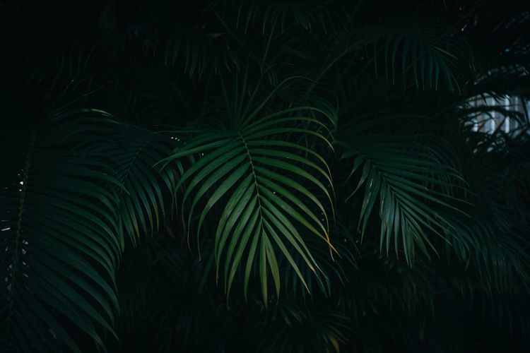 Full frame shot of palm trees at night