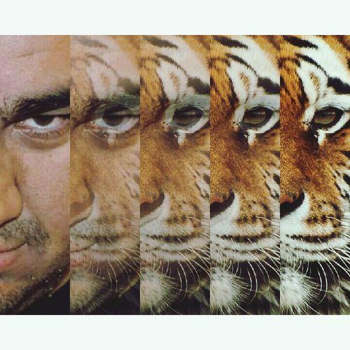 Tiger Mantiger First Eyeem Photo