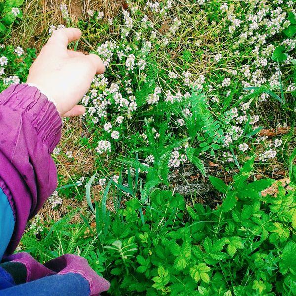 ветровка рука трава цветы🌸🌼🌻💐🌾🌿 музыкамоёвсё мокро радостиии счастьевмелочах