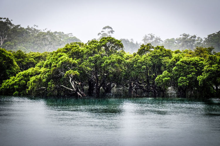 Australian Mangroves Australian Landscape Beauty In Nature Day Gum Trees Landscape Mangrove Swamp Nature No People Outdoors Rain Sky Tranquility Tree Water Huskinson New South Wales Australia EyeEm Nature Lover Landscape_Collection Landscape_photography Tranquil Scene EyeEm New Here