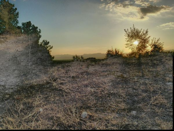 Experimental at Catalunya Mobile Photography Mobilephotography Sony Xperia Zr HDR Forest Tree Area Scenics Growth Nature Sky Day Daydreaming Mountain Outdoors Nature No People Ground Sun Sunlight And Shadow Overexposed