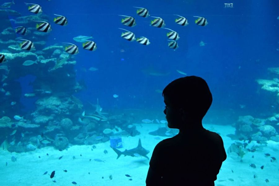 People Of The Oceans Planetarium Aqvarium Kid Sea Child Eilat Swimming With The Fish Swimming Pool Swimming Fish Boy Shadow