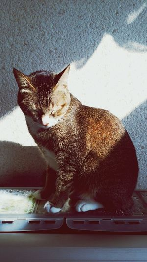 My lovely cat. Cat Shiny Sunlight And Shadow Close Eyes Feeling The Sun My Baby Cat Lovers Sunlight She Sitting Pretty My Cat Animal Themes