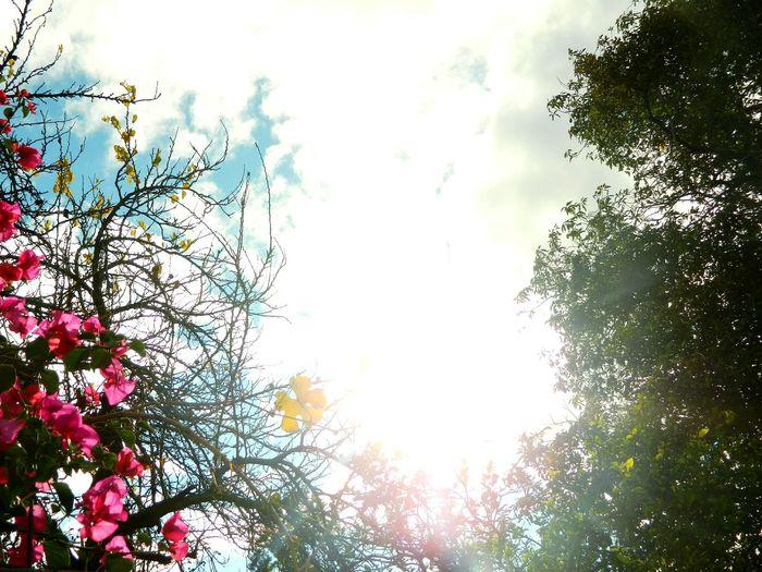 Everyday Joy Light Up Your Life Sky Primavera-Invierno ?