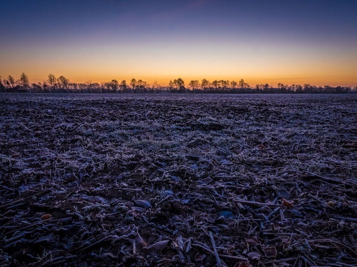 Agriculture Beauty In Nature Blue Blue Hour Cold Cold Temperature Dawn Day Frosty Mornings Hoar Frost Nature No People Orange Outdoors Scenics Sky Sunrise Teal And Orange Tranquil Scene Tranquility Tranquillity Winter