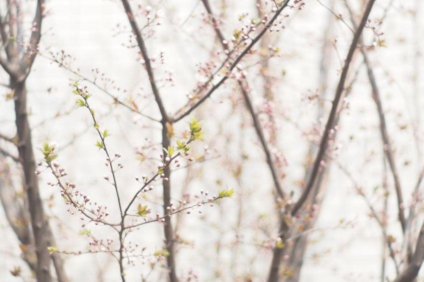 Spring Flowers Flower Flowers