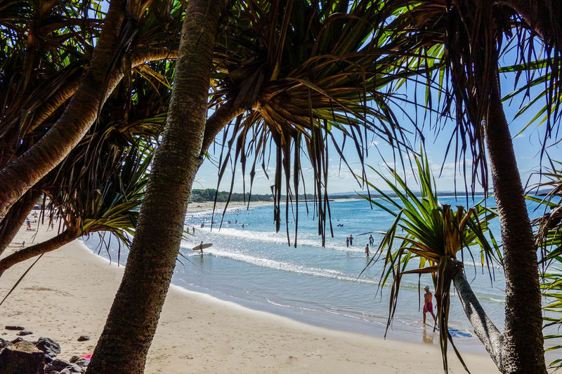 Australia Beach Beauty In Nature Beauty In Nature Green Horizon Over Water National Park Nature Photography Noosa Palm Tree Queensland Sand Sea Summer Tourism Tourist Tourist Resort Travel Travel Destinations Traveling Tree Trunk Tropical Climate Vacations Wanderlust Water