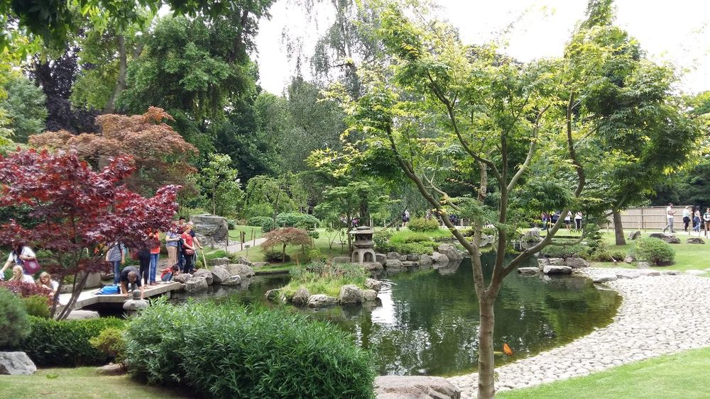 Holland Park Holland Park Japanese Garden Kyoto Garden London Growth Tree Nature Outdoors Day Beauty In Nature Green Color Plant Flower Water Freshness