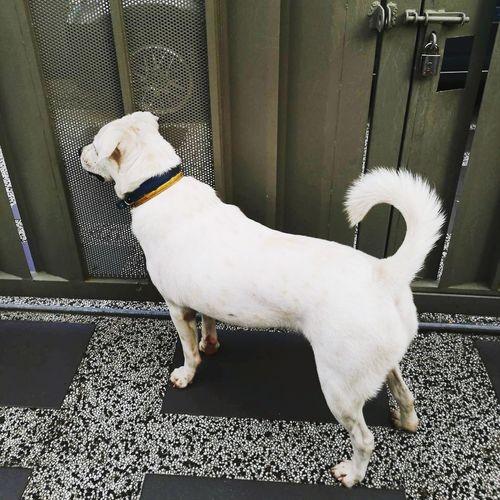 EyeEm Selects Pets Dog One Animal Domestic Animals Animal Animal Themes Indoors  Mammal Day No People Close-up Mongrel Mongrels Mongrelsareawesome Mongrelsarethebest