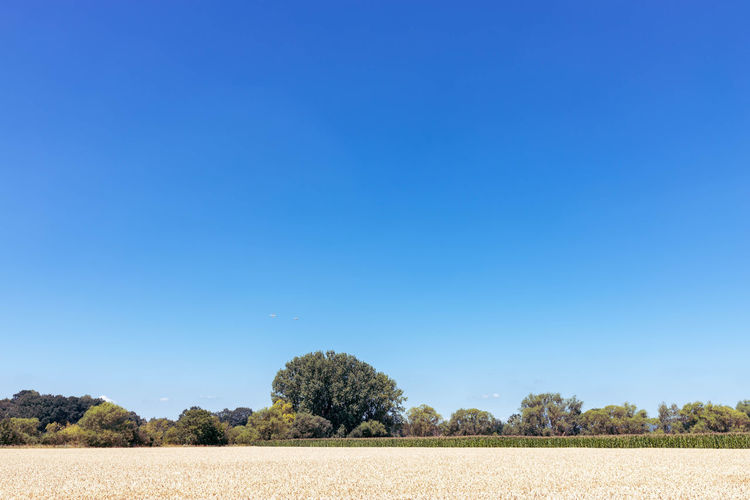 scenic view of field against clear blue sky Beauty In Nature Blue Clear Sky Copy Space Day Environment Feld Field Growth Idyllic Juli Land Landscape Nature No People Non-urban Scene Outdoors Plant Scenics - Nature Sky Solitärbäume Tranquil Scene Tranquility Tree