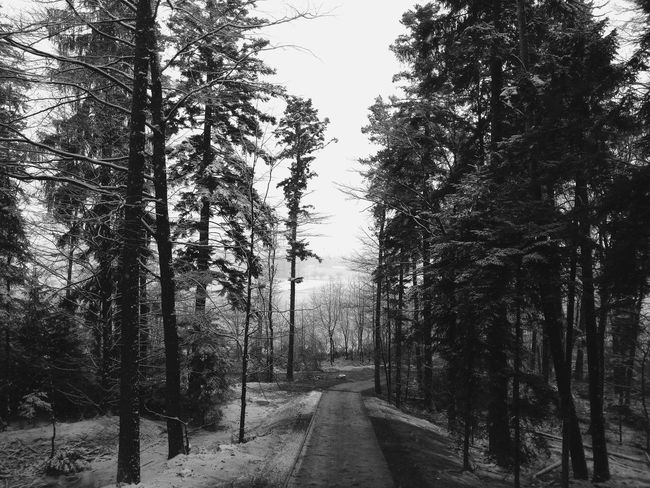 Forrest way Germany Non-urban Scene Landscape_photography Outdoors Day Forest Landscapes No People Branch Photography Trees Way Path Road Blackandwhite Black And White Black & White Landscape High Trees Beauty In Nature