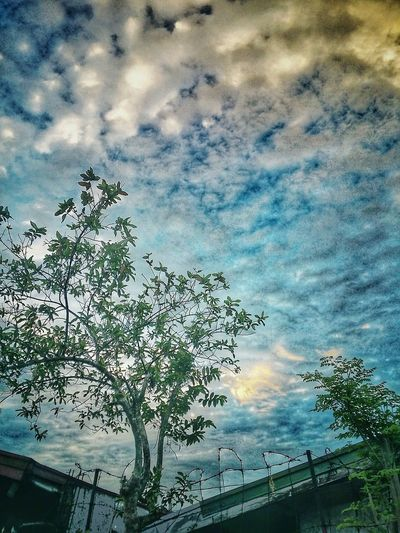 Morning sky Morning Sky No People Nature Day Cloud - Sky Outdoors Tree Beauty In Nature
