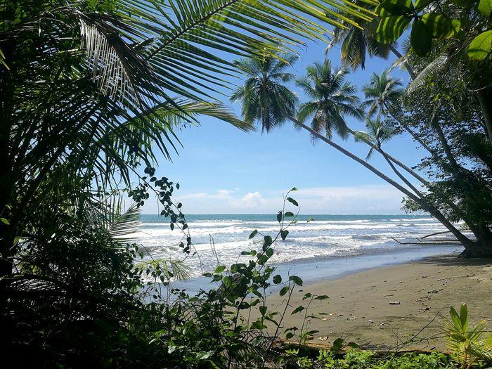 Tree Water Sea Beach Palm Tree Tropical Climate