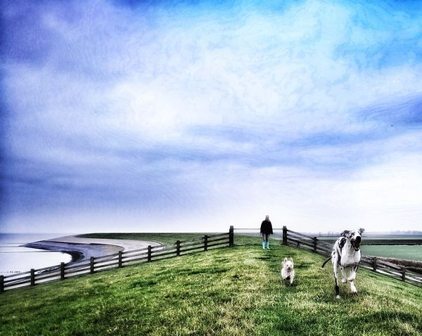 Sea Nature Grass Outdoors Water Sky Beauty In Nature Beach Horizon Over Water Scenics Day No People Tranquil Scene Non-urban Scene Dog Life Dogwalk Walking The Dogs Seascapes Seascape Photography Great Dane❤ Week On Eyeem