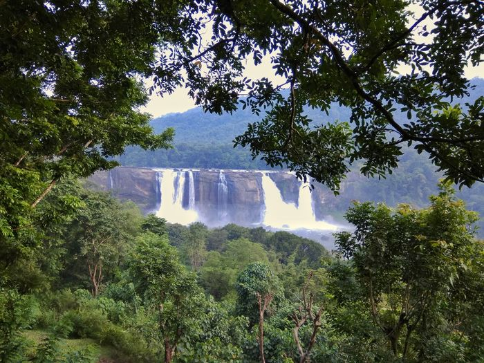 Athirapally waterfalls Tree Water Nature Waterfall Beauty In Nature Forest Motion Scenics Outdoors Day Branch Growth Power In Nature No People Sky Freshness India Nature Travel Travel Destinations Beauty In Nature Kerala Rain Forest AthirapallyFalls Travel Destination