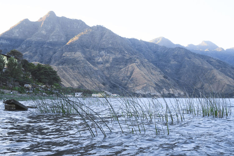 Grass in the lake, view on the mountain. Lago Atitlan, Guatemala Atitlan Lake Beauty In Nature Cold Temperature Day Guatemala Mountain Mountain Range Nature No People Outdoors Scenics Sky Snow Tranquil Scene Tranquility Travel Photography Tree Water Winter