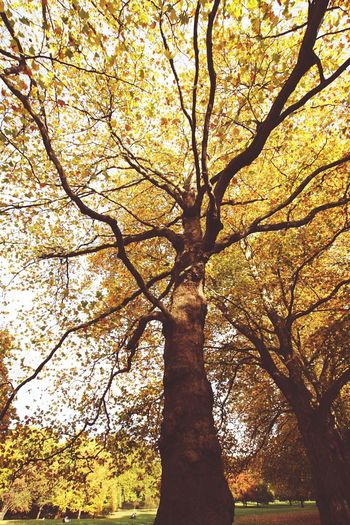 Autumn tree Autumn Autumn Colors Autumn🍁🍁🍁 Tree Trees London United Kingdom pmg_lon London Lifestyle The Great Outdoors - 2017 EyeEm Awards Paint The Town Yellow