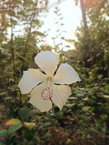 Eye Em Nature Lover Flowers Colours