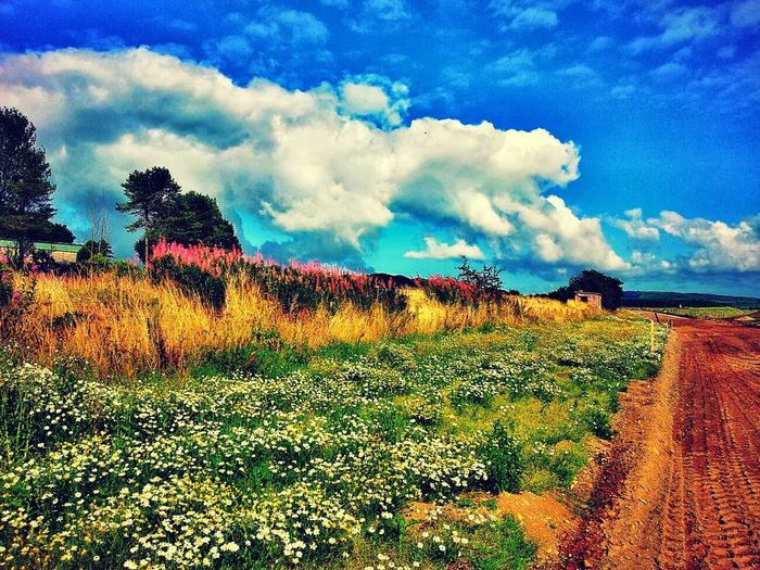 Wildflowers Flowers Clouds And Sky Road Building Vibrant Colors