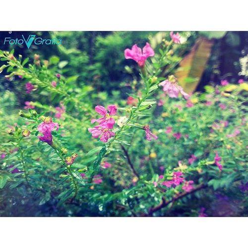 Chinnapoovu Chottawaala PINKY Greenyatmosphere Nature Naturelovers Godscreation Picoftheday Samsunggalaxys3 Mobilephotography Afterlight Like4likes Instacapture Instagood Instalike Imalayali