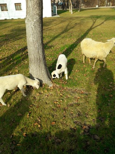 View of sheep on tree trunk