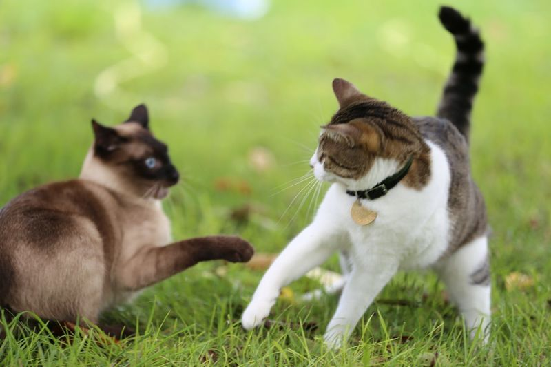 View of two cats on ground