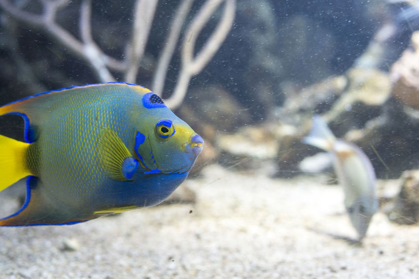 tropical fish Animal Themes Aqua Caribbean Colorful Coral Reef Fish Fish No People Sea Tank Tropical Climate Water