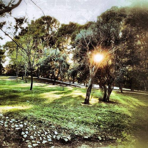 Komorebi :luz entre las hojas de los árboles en japones Zaragoza Igersaragon Igerszgz ParqueJoseAntonioLabordeta