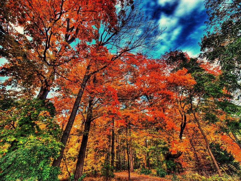 Polaroid Camera Autumn Beautiful Natural Beauty Trees