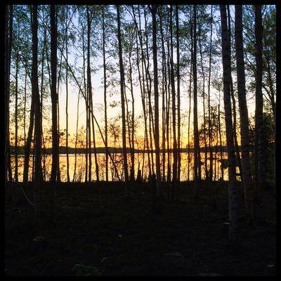 Silhouettes. Birch Betarsjön Ångermanland Sweden Visitsweden Swedishmoments